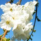 Remédios Florais de Bach