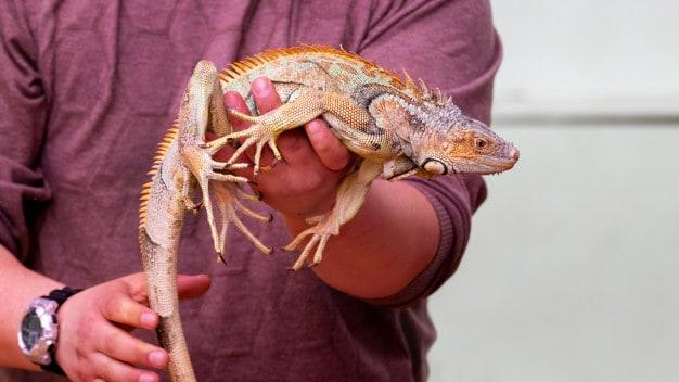 Homem segurando lagarto