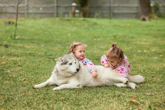 meninas com cachorro