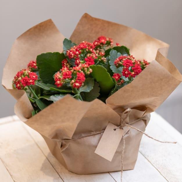 nomes de flores kalanchoê