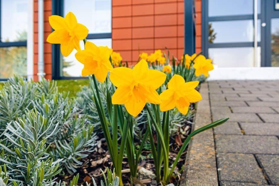 nomes de flores Narciso