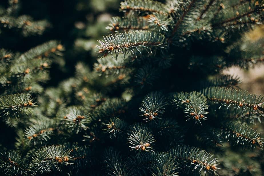 como limpar árvore de natal galhos e troncos